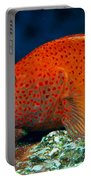 Blackside Hawkfish Portable Battery Charger