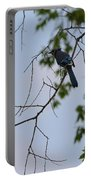 Blue Jay In Tree Portable Battery Charger
