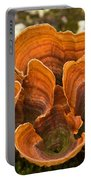 Bracket Fungi Portable Battery Charger