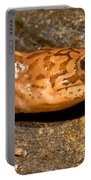 California Giant Salamander Portable Battery Charger