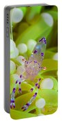 Commensal Shrimp On Green Anemone Portable Battery Charger by Steve Jones