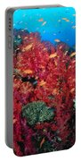Coral Reef Scene Portable Battery Charger