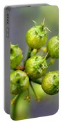 Coriander C. Sativum, Maturing Seedpods Portable Battery Charger