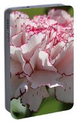 Creamy White With Red Picotee Carnation Portable Battery Charger
