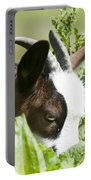 Domestic Pygmy Goat  Portable Battery Charger