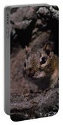 Eastern Chipmunk In Tree Portable Battery Charger