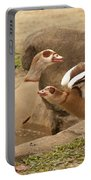 Egyptian Geese Portable Battery Charger