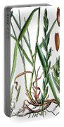 Elymus Repens, Commonly Known As Couch Grass Portable Battery Charger