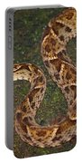 Fer-de-lance, Bothrops Asper Portable Battery Charger