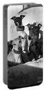 Italian Greyhounds In Black And White Portable Battery Charger