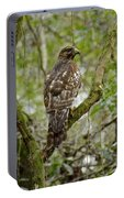 Juvenile Short-tailed Hawk Portable Battery Charger