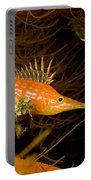 Longnose Hawkfish Portable Battery Charger
