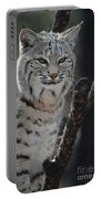 Lynx Perched In A Tree Portable Battery Charger