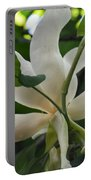 Magnolia Macrophylla Portable Battery Charger