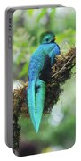 Male Quetzal Portable Battery Charger