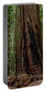 Montgomery Woods State Natural Reserve Portable Battery Charger