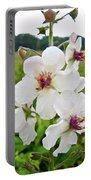 Moth Mullein Wildflowers - Verbascum Blattaria Portable Battery Charger