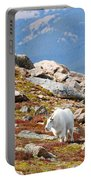 Mountain Goats On Mount Bierstadt In The Arapahoe National Forest Portable Battery Charger