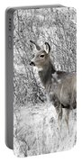 Mule Deer In Winter In The Pike National Forest Portable Battery Charger