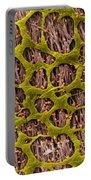 Myenteric Plexus, Sem Portable Battery Charger