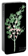 Pacific Mistletoe, Phoradendron Portable Battery Charger