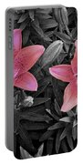 Pink Daylilies With Partially Desaturated Petals And Black And White Background Portable Battery Charger