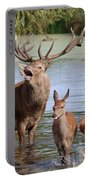 Red Deer In Bushy Park London Portable Battery Charger
