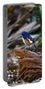 Red-flanked Bluetail 2 Portable Battery Charger