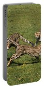 Ring Around The Cheetahs Portable Battery Charger