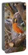 Robin On Cut Down Tree Branch Portable Battery Charger