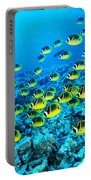 Schooling Raccoon Portable Battery Charger