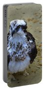 Sea Hawk Standing In Shallow Water Portable Battery Charger
