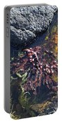 Seaweed Growing In A Rockpool On The Shore Roundstone County Galway Ireland Portable Battery Charger