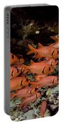 Shoulderbar Soldierfish Portable Battery Charger