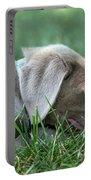 Silver Labrador Retriever Puppy  Portable Battery Charger