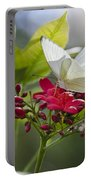 Southern White Butterfly  Portable Battery Charger