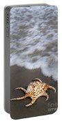 Spider Conch Shell Portable Battery Charger