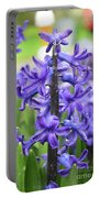 Spring Time With Blooming Hyacinth Flowers In A Garden Portable Battery Charger