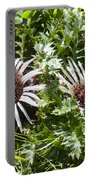 Stemless Carline Thistle Carlina Acaulis Portable Battery Charger