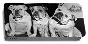 Three English Bulldogs Portable Battery Charger
