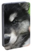 Up Close Look At The Face Of An Alusky Puppy Dog Portable Battery Charger