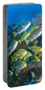 Yellow And Blue Striped Sweeltip Fish Portable Battery Charger