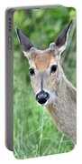 Young White-tailed Buck In Velvet Portable Battery Charger