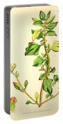 Illustrations Of The Flowering Plants And Ferns Of The Falkland Islands Portable Battery Charger