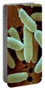 Lactobacillus Acidophilus Portable Battery Charger