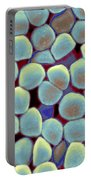 Lactococcus Lactis Portable Battery Charger