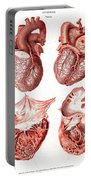 Heart, Anatomical Illustration, 1814 Portable Battery Charger