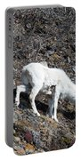 Dahl Sheep, Turnigan Arm Portable Battery Charger