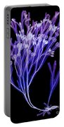 Rockweed Seaweed, X-ray Portable Battery Charger