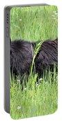 American Black Bear Yellowstone Usa Portable Battery Charger